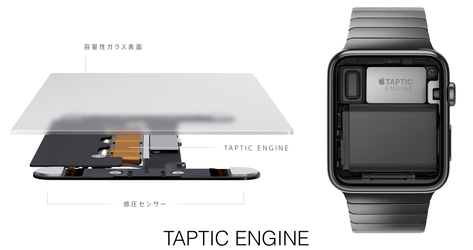 MacBook and Apple Watch Taptic Engine