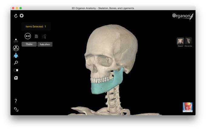 3D_Organon_Anatomy-Window