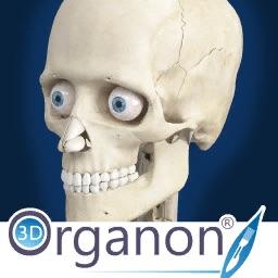 3D_Organon_Anatomy-logo-icon